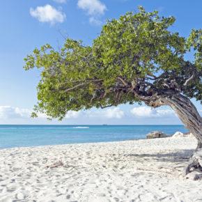 COORDENADAS | Aruba